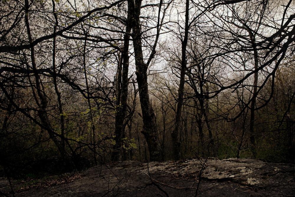 scary trees.jpg